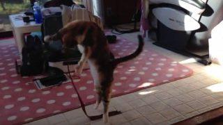 猫のリボンダンス
