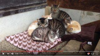 冬の猫団子(動画)