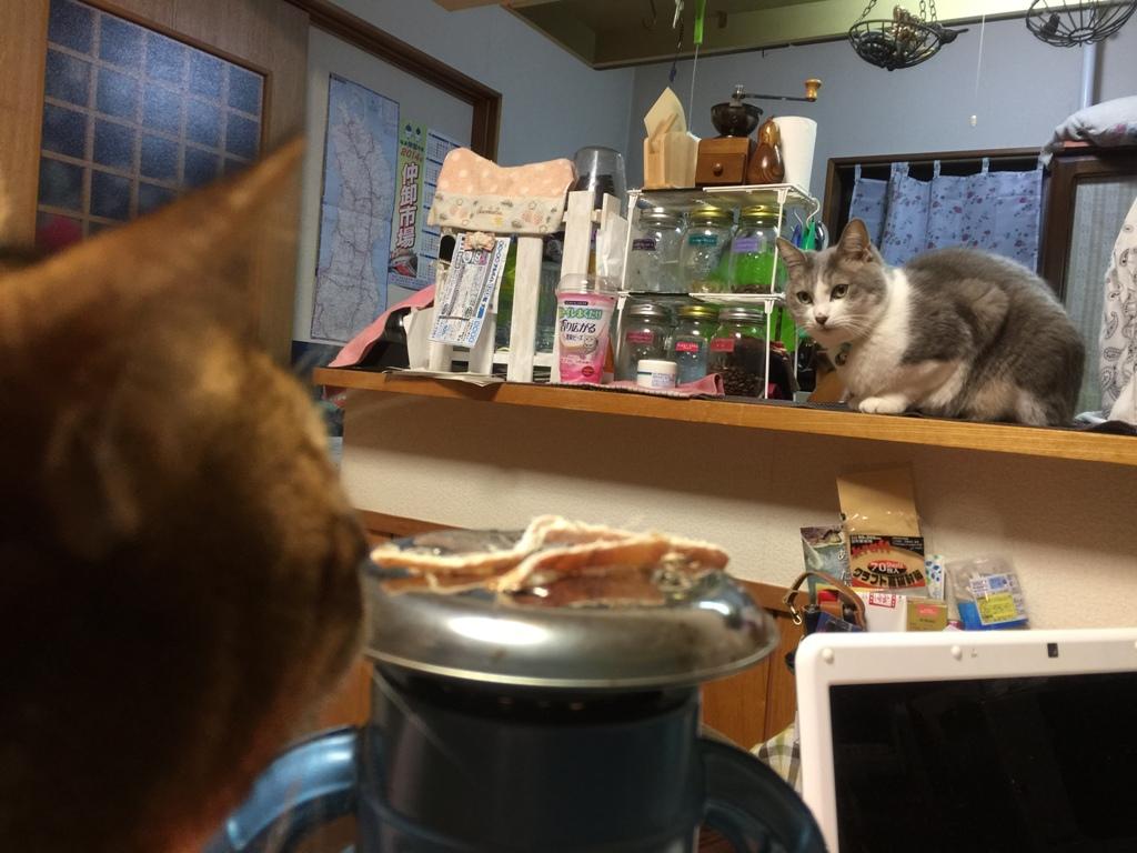 ランプと猫