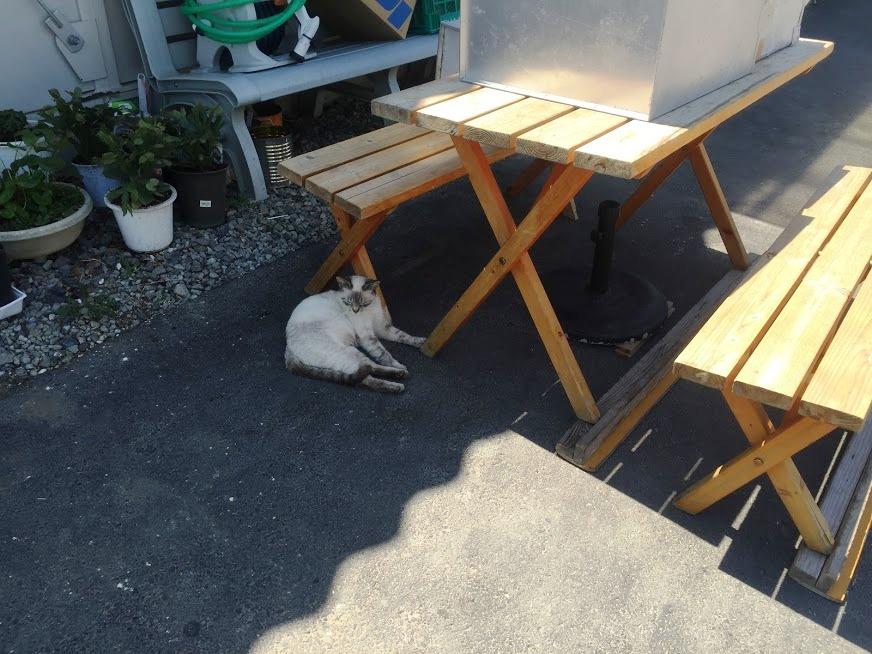お店の前でくつろぐ猫