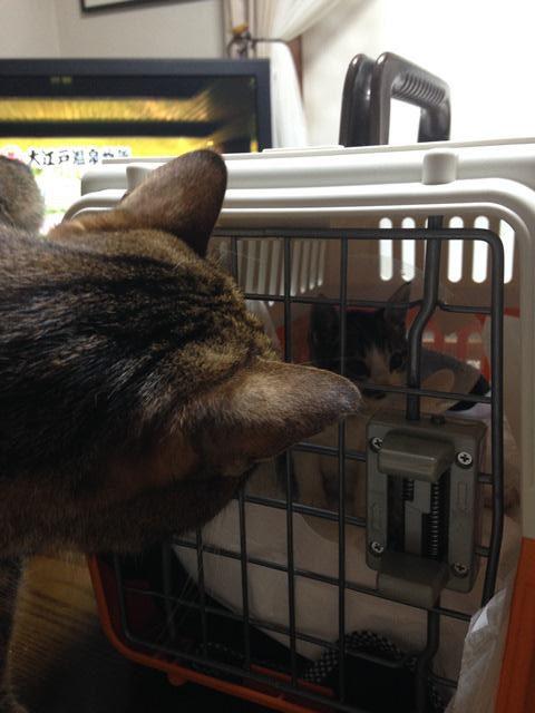 籠の中を覗き込む猫