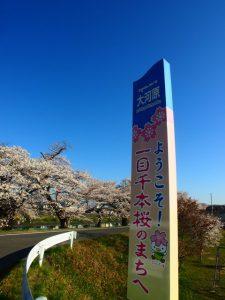 一目千本桜の看板