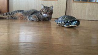 猫と亀さん