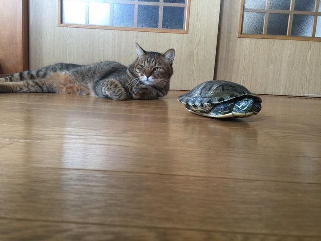 ミドリガメと猫