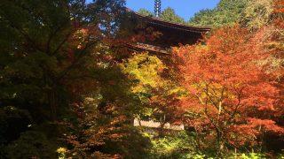 ここまで綺麗! 金剛輪寺の紅葉(滋賀県愛荘町)