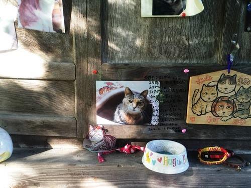 愛猫の写真