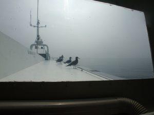 船に留まり休憩するカモメ