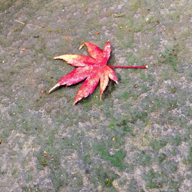 石の上の紅葉