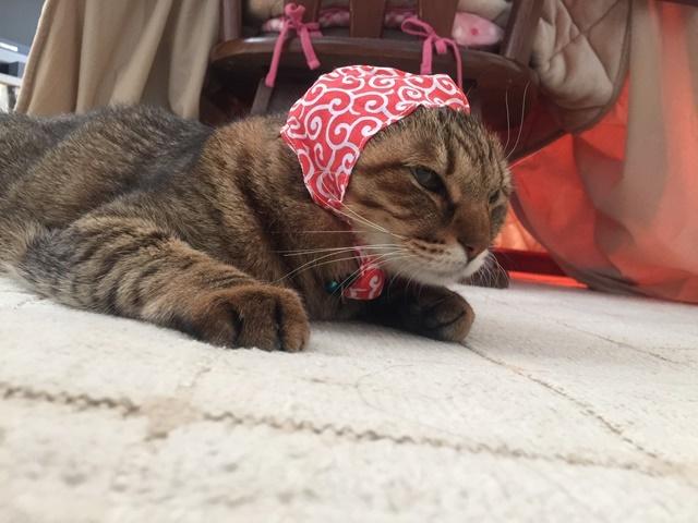 猫のかぶりもの