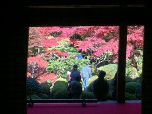 毛氈に座り紅葉を見る見物客