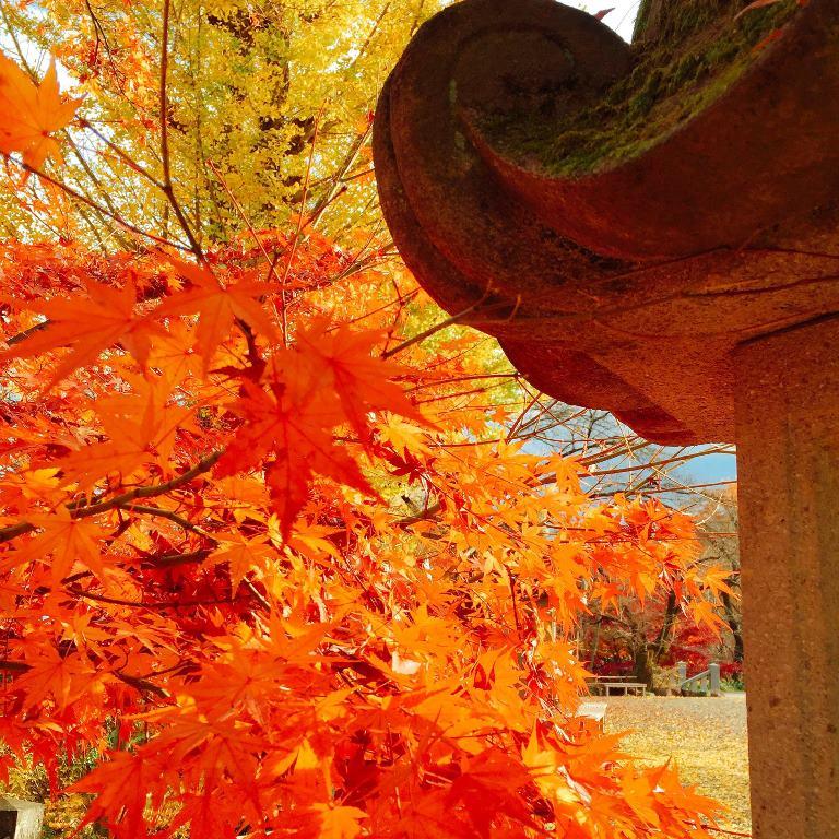 紅葉とイチョウのコントラスト