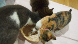 猫にまたたびの証明
