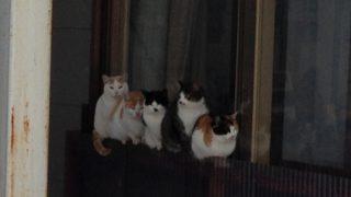 雪国の地域猫