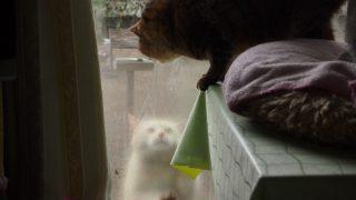 入れてくれとおねだりする猫