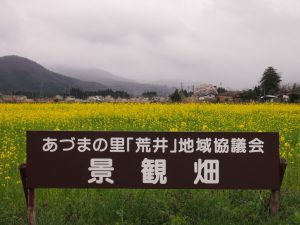 菜の花畑の看板