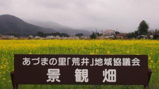 菜の花畑(福島市)