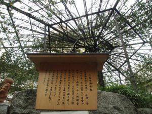 御幸桜の説明板