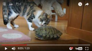 子猫 初めての亀さんとの遭遇