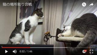 猫の場所取り合戦