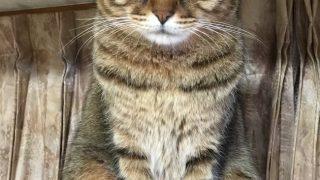 猫の雑巾がけ
