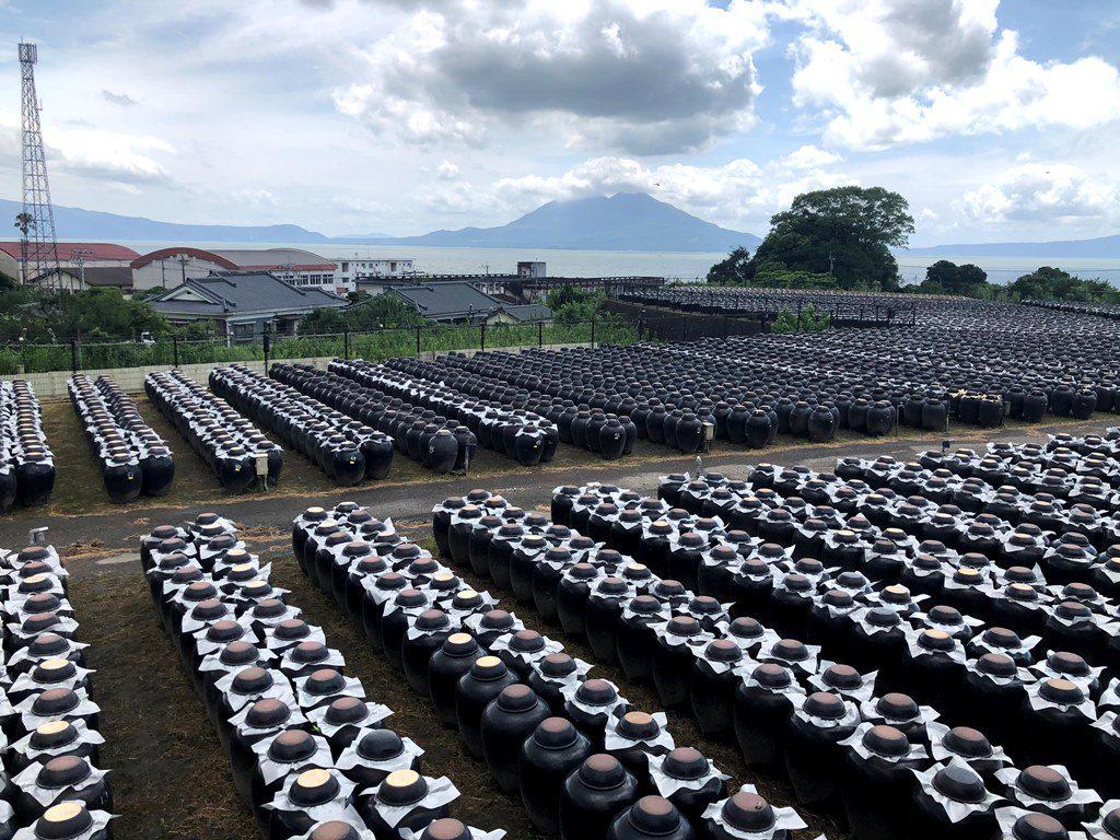 壺畑と桜島
